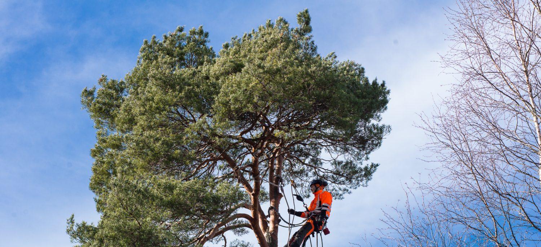 ARBWORKS - Snart i ett träd nära dig